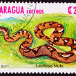 Canceled Nicaraguan Postage Stamp Bushmaster Snake Venomous Pitv — Stock Photo