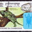 Canceled CambodiPostage Stamp Big-headed Turtle, Platysternon — Stock Photo #7897275