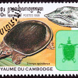Cambodian Postage Stamp, Spiny Softshell Turtle, Apalone Spinife - Stock Photo