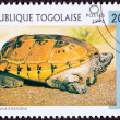 Canceled TogPostage Stamp Orange MexicMusk Turtle, Staurot — Stock Photo #7897319