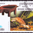canceled cambodian postage stamp swimming chinese pond turtle ch — Stock Photo