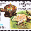 Stock Photo: Canceled CambodiPostage Stamp Impressed Tortoise, Manouriim