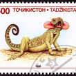 Canceled Tajikistan Postage Stamp Neck Flap Agamid Lizard Phryno - Stock Photo