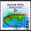 Canceled Hungarian Postage Stamp Brown Green Sand Lizard, Lacert — 图库照片