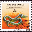 Canceled Hungarian Postage Stamp Grass Snake Natrix Natrix- Ring — Foto Stock