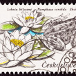Czechselovakian Postage Stamp Edible Frog, Pelophylax esculentus — Stock Photo