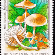 Canceled Hungarian Postage Stamp Edible Mushroom, Scotch Bonnet, — 图库照片