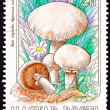 Canceled Hungarian Postage Stamp Meadow Mushroom, Agaricus Campe — 图库照片
