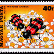 Hungarian Postage Stamp Bee Beetle Trichodes Apiarius,Yarrow Ach — Stock Photo