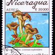 Canceled NicaraguPostage Stamp Clump Black Chanterelle Mushroo — Stock Photo #7897479
