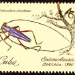 Stock Photo: Canceled CubPostage Stamp Iridescent Tree Borer Insect Pinthe