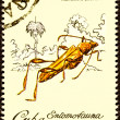 Canceled Cuban Postage Stamp Cricket Like Insect Odontocera Jose — Stock Photo