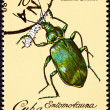 Canceled CubPostage Stamp Metallic Green Beetle CalosomSple — Stock Photo #7897491