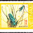 Stock Photo: Canceled Vietnam Postage Stamp Pair Green Spotted Beetle Antenna