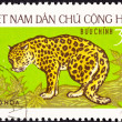 Canceled North Vietnamese Postage Stamp Leopard Panthera Pardus, — Stock Photo