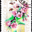 Canceled Soviet Postage Stamp Cherry Blossom Bee Hive Cultivatio - Stock Photo