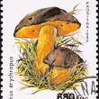 Canceled Madagascar Postage Stamp Clump Dotted Stem Bolete Bolet — Stock Photo