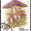 Canceled Madagascar Postage Stamp Clump Slippery Jack Mushrooms, — Stock Photo #7897631