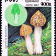 Canceled Cambodian Postage Stamp Clump Morel Mushroom, Morchella - Stock Photo