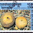 Canceled Cambodian Postage Stamp Round Umber-Brown Puffball Mush - Stock Photo