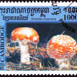 Canceled CambodiPostage Stamp Toadstool Fly Agaric mushroom, — Stock Photo #7897657