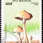 Benin Postage Stamp Psilocybin, Psychedelic Mushroom, Psilocybe — Stock Photo