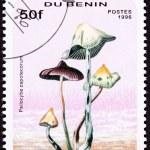 Canceled Benin Postage Stamp Psilocybin, Psychedelic Mushroom Ps — Stock Photo