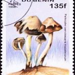 Benin Postage Stamp Psilocybin Psychedelic Mushroom Psilocybe Ca — Stock Photo