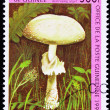 Guinea Postage Stamp Destroying Angel Mushroom Amanita Virosa, O - Stock Photo