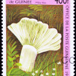 ������, ������: Canceled Guinea Postage Stamp Milky Blue Mushroom Lactarius Indi