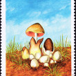 So Tom Postage Stamp Paddy Straw Mushroom Volvaria Volvacea - Stock Photo