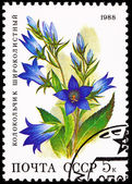 Russia Postage Stamp Flower Giant Bellflower Campanula Latifolia — Stock Photo