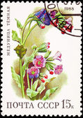 Russia Postage Stamp Flower Lungwort Plant Pulmonaria Obscura — Stock Photo