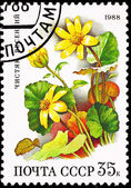 Soviet Russia Stamp Yellow Lesser Celandine Ranunculus Ficaria — Stock Photo