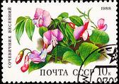 Soviet Russia Post Stamp Spring Vetchling Lathyrus Vernus Orobus — Stock Photo