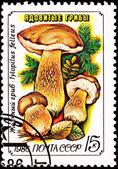 Sovětské rusko poštovní známka hřib žlučník hřib žlučník — Stock fotografie