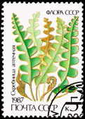 Russia Postage Stamp Hart's-Tongue Fern, Asplenium Scolopendrium — Stock Photo
