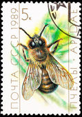 Canceled Soviet Russia Postage Stamp European Honey Bee Drone — Stock Photo
