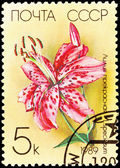 Canceled Soviet Russia Postage Stamp Spotted Pink Lily Lilium Sp — Stock Photo