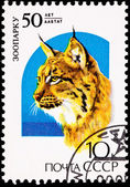 Canceled Soviet Russia Postage Stamp Big Cat Eurasian Lynx Lynx — Stock Photo