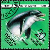 Post Stamp Bottlenose Dolphin Tursiops Truncatus — Stock Photo