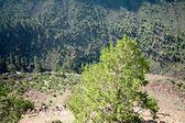 Looking Down Into Rio Grande Gorge New Mexico — Stock Photo