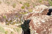 Rocks Above Rio Grande River Gorge New Mexico — Stock Photo