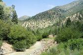 Stream Sangre De Cristo Mountains New Mexico USA — Stock Photo