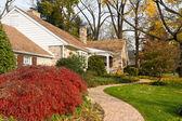 House Philadelphia Yellow Fall Autumn Leaves Tree — Stock Photo