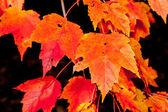 Full-frame haufen orange herbst ahorn laub baum — Stockfoto