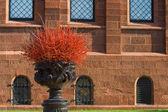 Pot Ilex verticillata Winterberry Front Building — Stock Photo