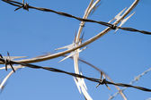 Barbed Wire Razor Sharp Security Fence Dangerous — Stock Photo