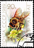Worker Bee Collecting Pollen from Flower — Stock Photo
