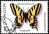 Papilio Alexanor, Yellow Swallowtail Butterfly — Stock Photo